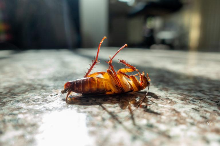 Desinsectación - Control Cucarachas