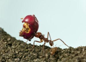 Desinsectación Control de Hormigas
